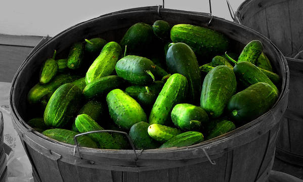 Food And Beverage Photograph Poster featuring the photograph Pickling Cucumbers by Ms Judi