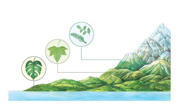 Monstera Sp. Poster featuring the photograph Plant Communities, Artwork by Gary Hincks