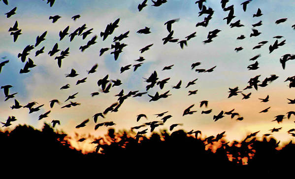 Flock Of Birds Poster featuring the photograph South-bound by Matt Marsh