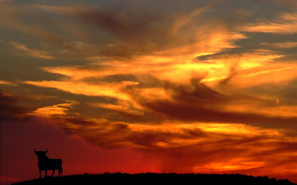 Bull At Sunset On Mountain Countryside Poster featuring the photograph Sunset Bull by Cliff Norton