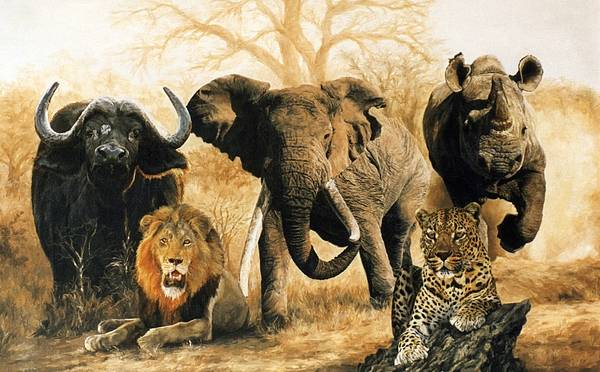 south africa s big five poster by yvette mey