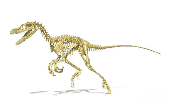 Three Dimensional Poster featuring the digital art 3d Rendering Of A Velociraptor Dinosaur by Leonello Calvetti