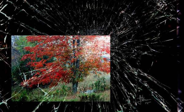 Autumn Poster featuring the photograph Autumn Abstraction by Jim Vance