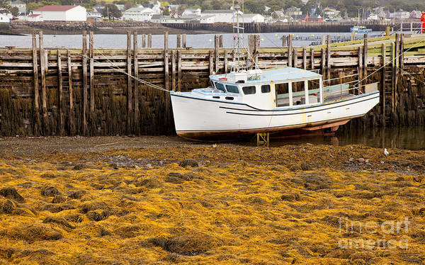 Boat Poster featuring the photograph Beached Boat During Low Tide In Nova Scotia Canada by Nick Jene
