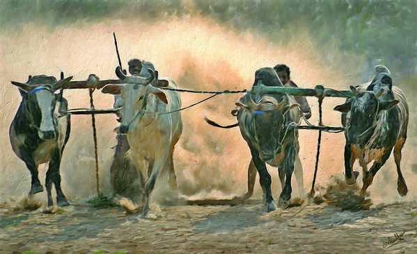 Race Rustic Bullock Animal Poster featuring the digital art Bullock Cart Race by Shreeharsha Kulkarni