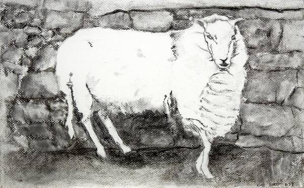 Poster featuring the painting Charcoal Sheep by Kathleen Barnes