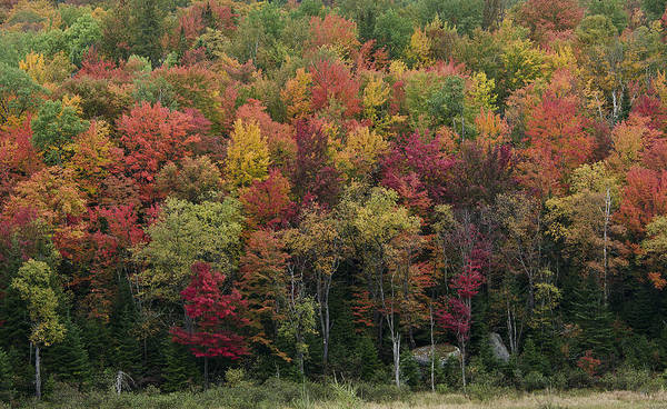 Fall Poster featuring the photograph Fall Foliage In The Adirondack Mountains - New York by Brendan Reals