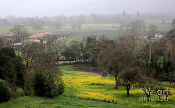 Mustard Poster featuring the photograph Foggy Day In Napa by Gail Salituri