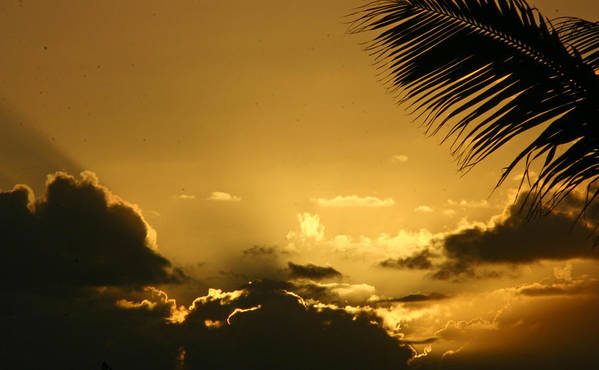 Tropical Poster featuring the photograph Golden Sunset by Doug Johnson