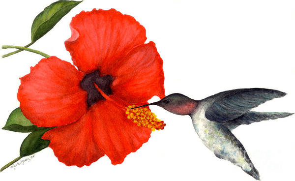 Hummingbird Poster featuring the painting Hummingbird by Marsha Young