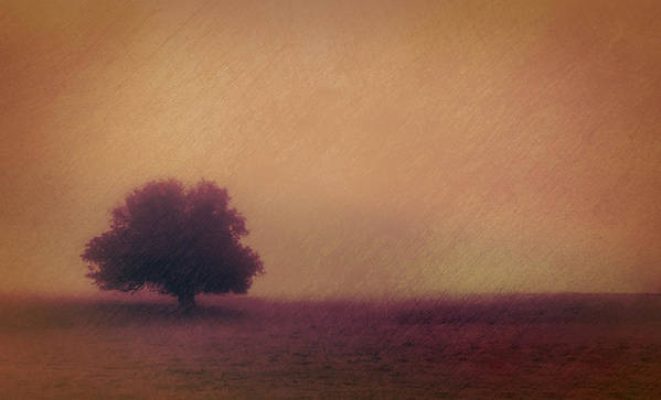 Autumn Poster featuring the photograph One Solitary Tree by Don Schwartz