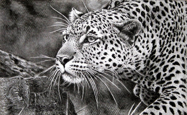 Leopard Poster featuring the painting Soot Painting by M D Parashar