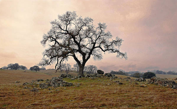 Landscape Poster featuring the photograph Amador Oak by M Ryan