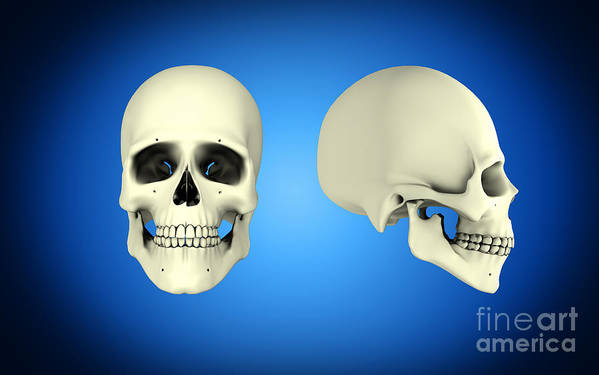 Horizontal Poster featuring the digital art Front View And Side View Of Human Skull by Stocktrek Images