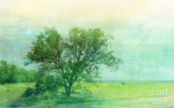 Tree Poster featuring the photograph Tree In The Flint Hills by Susan Turner