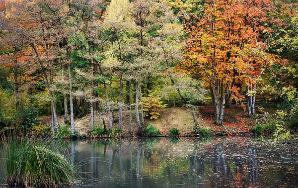 Autumn Poster featuring the photograph Trees In Autumn by Natalie Kinnear