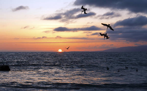 America Poster featuring the photograph Pelicans Diving At Sunset by Artistic Photos
