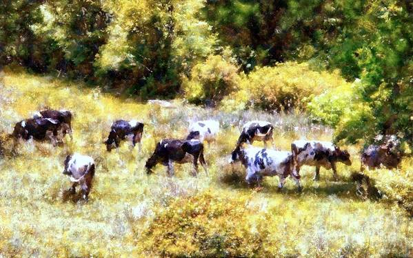 Holstein Cows Poster featuring the photograph Dairy Cows In A Summer Pasture by Janine Riley
