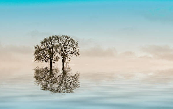 Trees Poster featuring the photograph Moody Trees by Jean Noren
