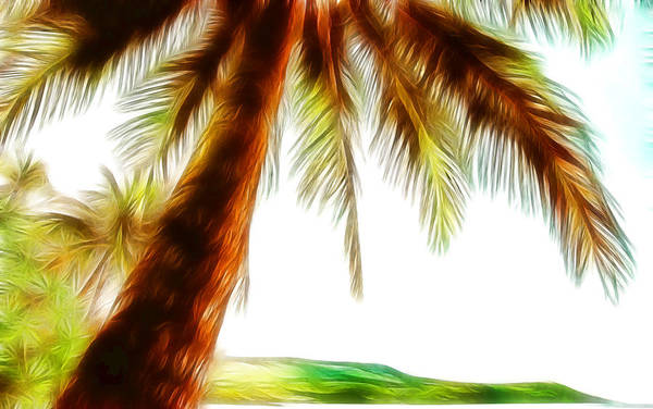 Tropical Palm Trees Poster featuring the photograph Paradise Palm by Athena Mckinzie