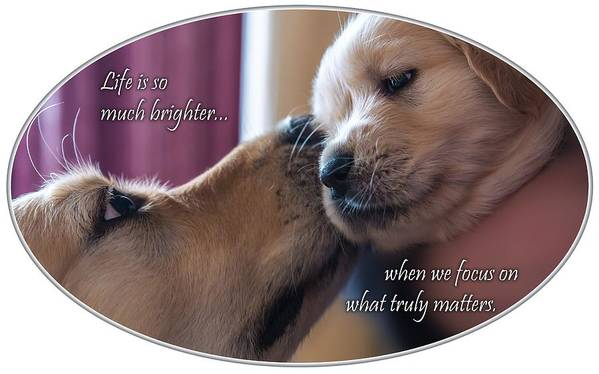 Puppy Poster featuring the photograph Puppy Love by Chris Whiton