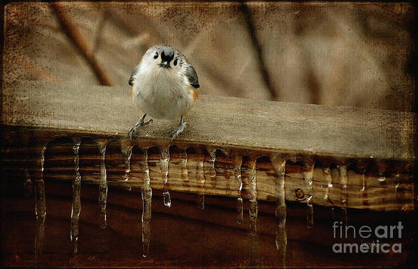 Titmouse Poster featuring the photograph Life Can Be Tough by Lois Bryan