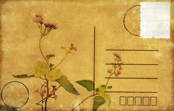 Address Poster featuring the photograph Floral Pattern On Postcard by Setsiri Silapasuwanchai