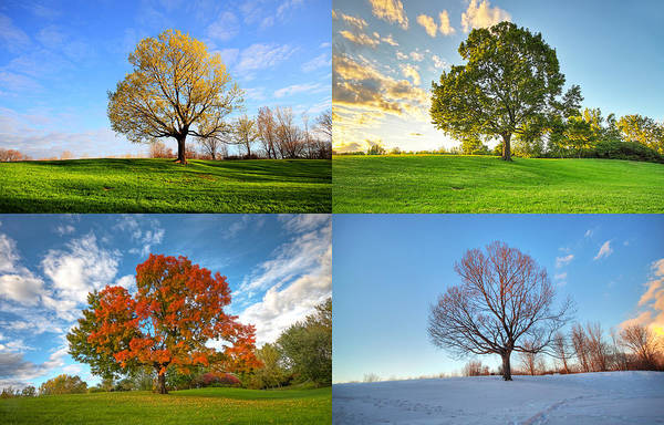 Canada Poster featuring the photograph Canadian Seasons by Mircea Costina Photography