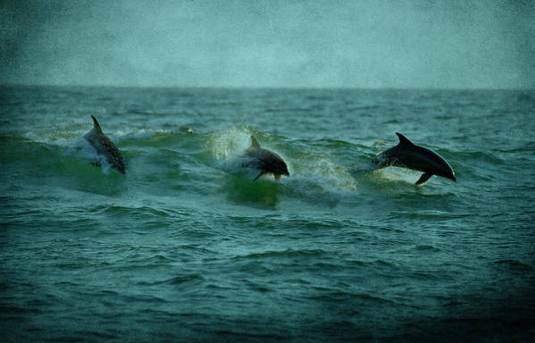 Dolphins Poster featuring the photograph Dolphins by Sandy Keeton