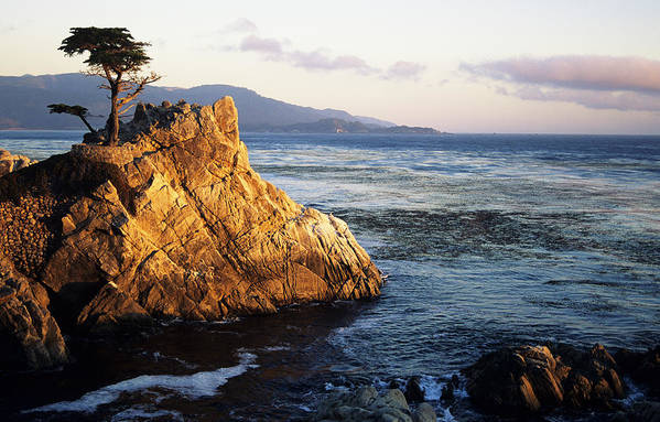 Afternoon Poster featuring the photograph Lone Cypress Tree by Michael Howell - Printscapes