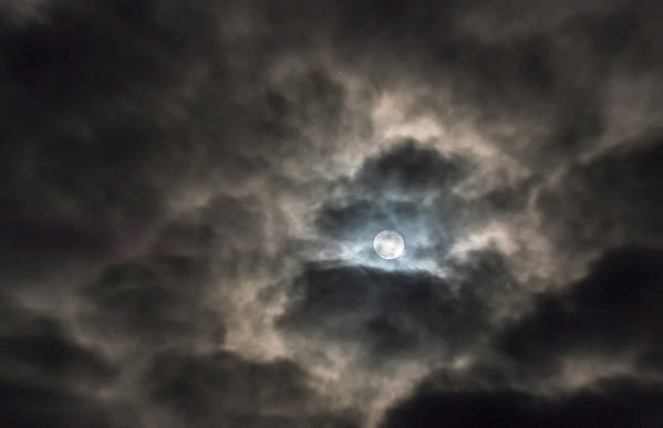 Loree Johnson Photography Poster featuring the photograph Moonglow by Loree Johnson
