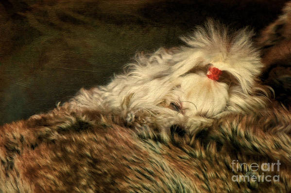 Dog Poster featuring the photograph A Long Winter's Nap by Lois Bryan