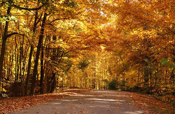 Autumn Poster featuring the photograph Colorful Canopy by Sandy Keeton