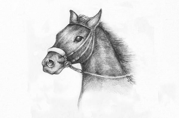 Animal Poster featuring the drawing Pencil Drawing Of A Horse by Kiril Stanchev