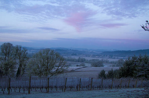 Weather Poster featuring the photograph Vineyard Morning Light by Jean Noren