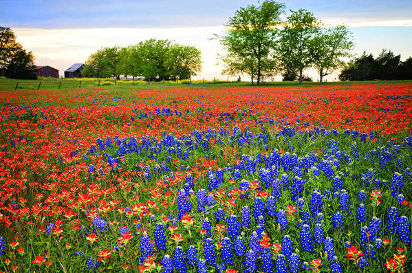 Bluebonnets In The Texas Hill Country Poster featuring the photograph Wildflower Tapestry by Lynn Bauer
