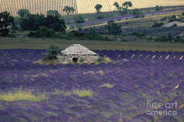 Touristic Poster featuring the photograph Field Of Lavender. Sault by Bernard Jaubert