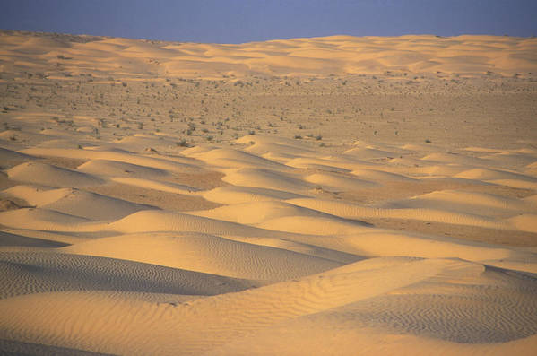 Outdoors Poster featuring the photograph A Sea Of Dunes In The Sahara Desert by Stephen Sharnoff