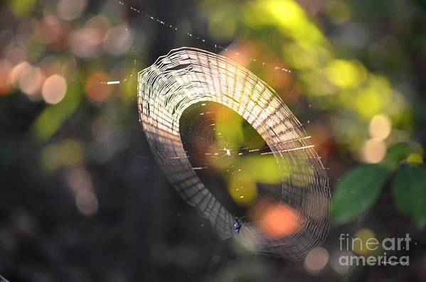 Dappled Poster featuring the photograph Dappled Web Of Deceit by Maria Urso