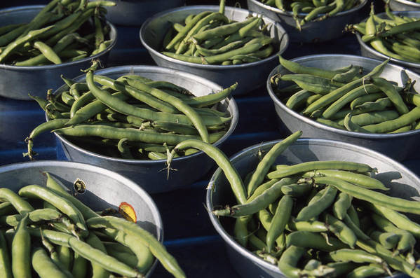 Outdoors Poster featuring the photograph Green Beans In Tin Buckets For Sale by David Evans
