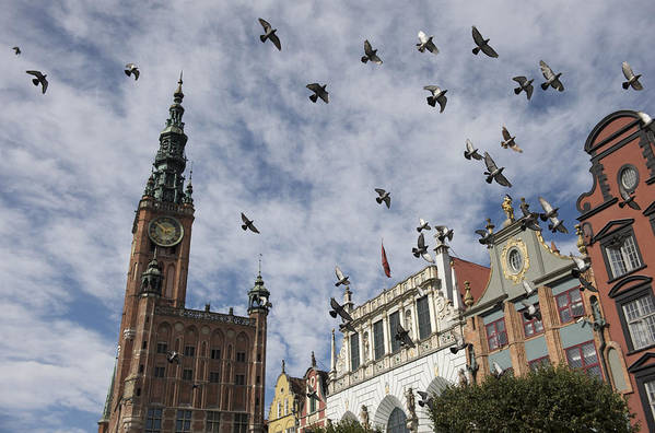 Animal Poster featuring the photograph Long Market With Pigeons, Town Hall by Keenpress