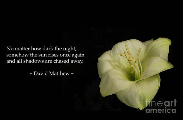 Inspirational Poster featuring the photograph White Lily In The Dark Inspirational by Ausra Huntington nee Paulauskaite