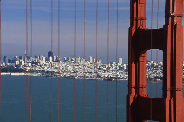San Francisco Poster featuring the photograph Urban Jungle by Soli Deo Gloria Wilderness And Wildlife Photography