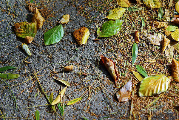 Aged Poster featuring the photograph Fallen Leaves by Carlos Caetano