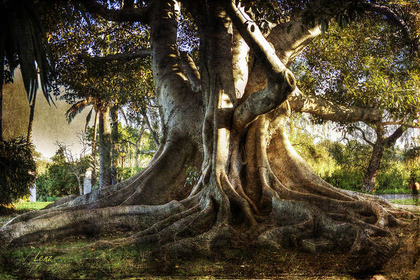 Tree Poster featuring the photograph Roots by George Lenz