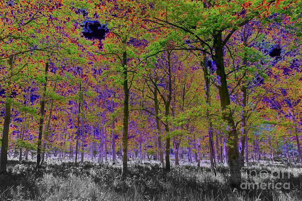 Tree Poster featuring the digital art Forest Art by David Pyatt