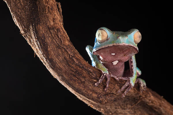 Tree Frog Poster featuring the photograph Tree Frog by Dirk Ercken