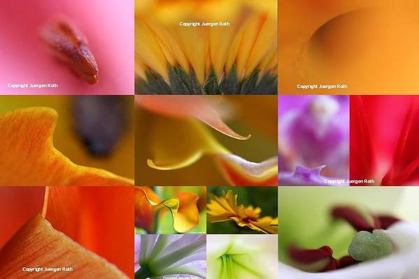 Flower Poster featuring the photograph Abstract Fine Art Flower Photography by Juergen Roth