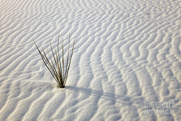 White Sands Poster featuring the photograph Alone In A Sea Of White by Mike Dawson
