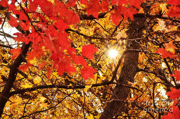 Autumn Photo Poster featuring the photograph Autumn Sunrise Painterly by Andee Design